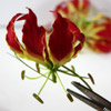 gloriosa flowers for a diy tropical wedding centerpiece