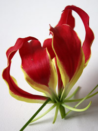 gloriosa flower for a diy tropical wedding centerpiece