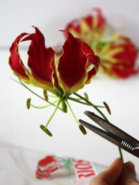 gloriosa flower for a tropical wedding centerpiece