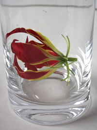 gloriosa in a tall wedding vase