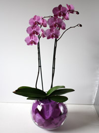 a phalaenopsis plant arranged as a wedding centerpiece
