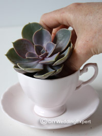 planting vintage wedding favors in cups