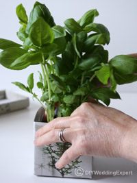 planting herbs to create a wedding centerpiece