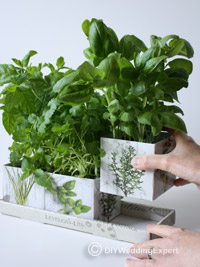 pretty themed herb boxes for a wedding decoration