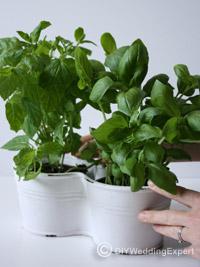 diy herb wedding centerpiece