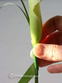 adding beargrass to a calla lily buttonhole